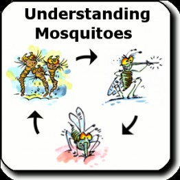 Торонто комар-переносчик вестнильский вирус