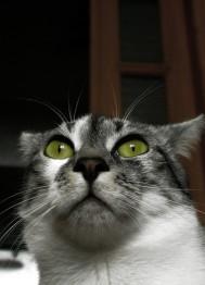 убивают кошек котов в Эдмонтон