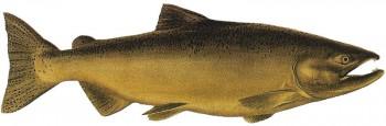 Канада лосось