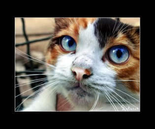 Жестокий убийца кошек