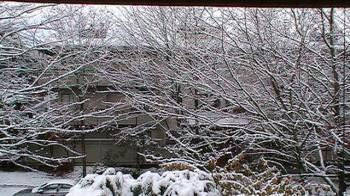 Первый снег в Ванкувере, Британская Колумбия