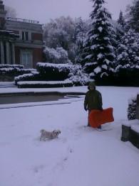 Ванкувер снег снегопад собака