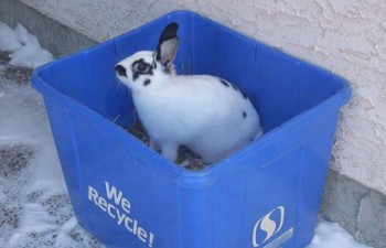 Кролик Реджайна Саскачеван Канада