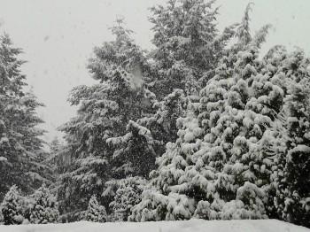 остров Ванкувер снег снегопад Британская Колумбия Канада